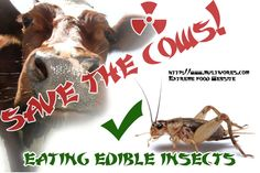 Save the cows, eating edible insects - sauvons les vaches, mangeons des insectes!