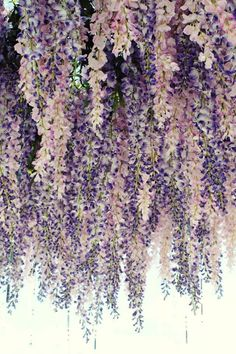 Floral Installation | Plum Pretty Sugar