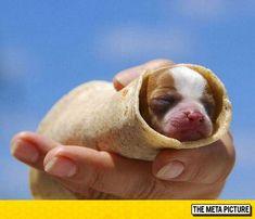 Probably The Cutest Burrito Ever