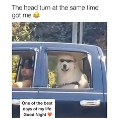 funny animals can't stop laughing * funny animals ; funny animals can't stop laughing ; funny animals videos can't stop laughing ; funny animals with captions ; Funny Shit, Funny Dog Memes, Really Funny Memes, Funny Dog Videos, Funny Video Memes, Pet Videos, Videos Video, Hilarious, Cute Animal Memes