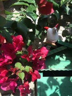 #5 Plants, Flora, Plant