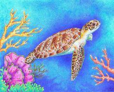 Sea Turtle Art Print 11x14 inch Color Pencil by AnimalArtByJodi, $25.00