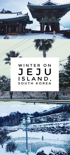 "The Jeju Island Winter That Shut Down the ""Hawaii of Korea"": A Jeju Island winter in South Korea sees palm trees and Buddhist temples covered with snow, transforming the island paradise into a winter wonderland."