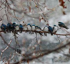 Three little birds. actually thirteen little birds. Pretty Birds, Love Birds, Beautiful Birds, Animals Beautiful, Cute Animals, Baby Animals, Hello Beautiful, Beautiful Family, Wild Animals