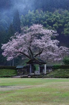 Fukui, my hometown, living 18 years Beautiful World, Beautiful Places, Sakura Cherry Blossom, Cherry Blossoms, Japanese Culture, Japan Travel, Beautiful Landscapes, Places To See, Scenery