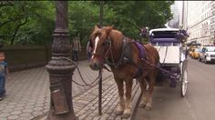 Carriage horse breaks loose in Central Park, nearly runs down pedestrians