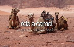 Not in the desert. I want to own my own camel to ride.