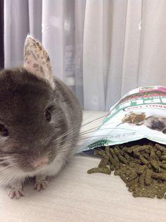 Chcnchillas food - high quality pellet Versele Laga Complete