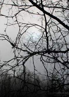 Through The Fog by LadySnowAngel Photography