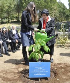 A few weeks ago, in advance of the upcoming Holocaust Remembrance Day, a new tree was planted at Yad Vashem. The sapling was a special one, sprouted from a chestnut tree that Anne Frank wrote about in her diary...