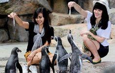 Wisata ke Taman Safari Bogor, Menikmati Keindahan dan Kekayaan Alam Indonesia
