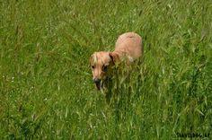 Frisch gebloggt. :-) Es geht bald los ... Sicily, Dogs, Animals, Getting Up Early, Hiking, Fresh, Round Round, Animales, Animaux