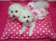 Valentine Dog Dress or Cat Dress  Double by graciespawprints, $23.95