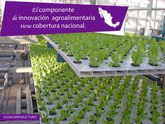 El componente de Innovación Agroalimentaria tiene cobertura nacional. SAGARPA SAGARPAMX #SomosProductores