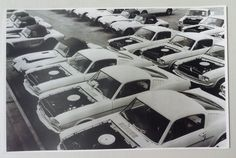 1965 Mustangs Waiting for Shelby Modifications 8 x 10 Photograph Just for you 1965 Shelby Cobra, Ford Shelby, Ford Gt, Shelby Mustang, 1965 Mustang, Mustang Fastback, Classic Mustang, Ford Classic Cars, Shelby Gt350r