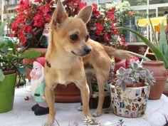 In vacanza con Poldo, il mini cane, a Milano Marittima all'Hotel Al Cacciatore di Sogni