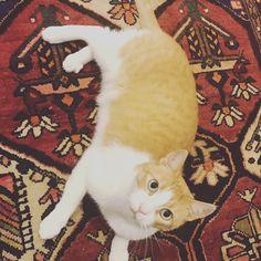 #WHStyle#DesignItPinItWinIt Cats, Animals, Design, Gatos, Animales, Kitty Cats, Animaux, Animal, Cat
