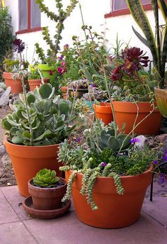 35 Indoor And Outdoor Succulent Garden Ideas Planters succulent pots Succulents Chicks and hens Succulent Gardening, Succulent Pots, Cacti And Succulents, Planting Succulents, Garden Pots, Planting Flowers, Vegetable Gardening, Potted Plants, Succulents In Containers