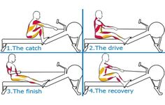 Rowing Technique and muscle groups.  #RowingMachine #Rower #RowingTips