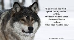 Wolf Images, Wolf Photos, Wolf Pictures, Animal Spirit Guides, Wolf Spirit Animal, Wisdom Quotes, Words Quotes, Life Quotes, Sassy Quotes