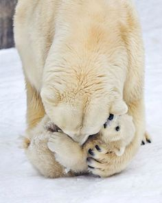 "Do you love cute animal pics? How about cute mama and baby animal pics? I actually have a whole Pinterest board called ""Cute Animal Pics."" I feel myself smiling when I gaze at these adorable photos.  Enjoy…                   ""Aww."" Aren't they cute? If these photos didn't make ... Read More about Cute Mama & Baby Animal Pics"