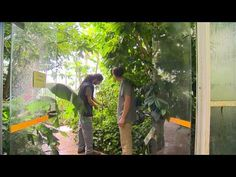Jardin de Normandie : le Jardin des Plantes de Caen - YouTube