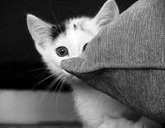 A black and white image of a kitten peeking around a pillow.