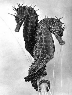 """""""Sea Horses are monogamous life mates and travel holding each other's tails. They protect one to the other and go together in the current of the sea and in the stream of time. They never separate."""" Helena Costa"""