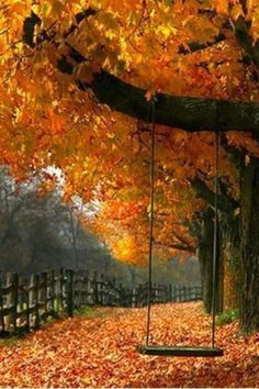 Autumn swing- wherever this is- want to be on the swing in the fall!