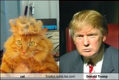 This cat must be shocked by the resemblance! Donald Trump Hair, Funny Photos, Animal Pictures, Memes, Animals, Image, Google Search, December, Book