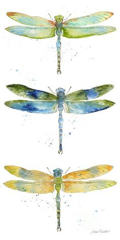 schmetterling mandala mandala Dragonfly by Jean Plout Dragonfly Painting, Dragonfly Art, Watercolor Dragonfly Tattoo, Dragonfly Drawing, Dragonfly Wallpaper, Watercolor Tattoos, Watercolor Animals, Watercolor Paintings, Watercolors