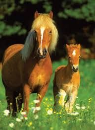 1000 Images About Paarden On Pinterest Horses Dieren