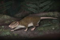 El mamífero 'Rugosodon eurasiaticus' tenía hábitos nocturnos.| April Isch/Universidad de Chicago