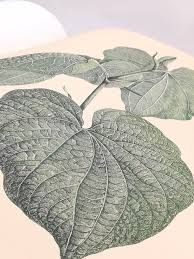 Captain Cook's first voyages and Banks'Florilegium - Google 検索 Banks, Book Art, Plant Leaves, Cook, Google, Cooking