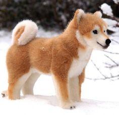 shiba dog , I WANT ONE