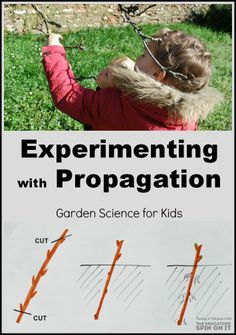 Experimenting with propagation, garden science projects for kids. #plantaseed #STEM