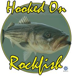 A rockfish fishing t shirt design at: http://www.captntom.com/fishing-t-shirt-boatique/shop/3098-rockfish-t-shirt-hooked-on-rockfish/ - You'll find over 200 cool fishing, boating, hunting, funny and other t shirts here. Click image to comment on this design. Please Repin. #Captntom #Rockfish #RockfishFishing #SaltwaterFishing #Fishing #Shirt