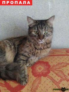 Пропала кошка г.Липецк http://poiskzoo.ru/board/read31297.html  POISKZOO.RU/31297 Пропала кошка серо-коричневая в полоску, пушистая в р-неЛТЗ (на улице Жуковского)откликается на имя Соня. Просьба нашедшему вернуть за вознаграждение Тел. ...  РЕПОСТ! @POISKZOO2 #POISKZOO.RU #Пропала #кошка #Пропала_кошка #ПропалаКошка #Липецк