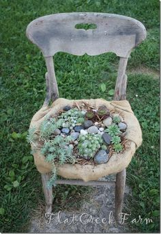 old...chair...succulent beauty... i have a rocking chair waiting for this!