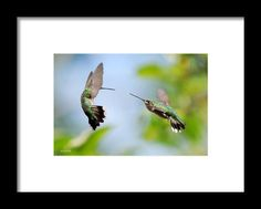 Direct Confrontation Framed Print By Christina Rollo