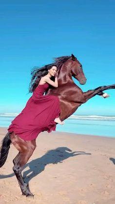 Beautiful Arabian Horses, Most Beautiful Horses, Beautiful Nature Pictures, Cute Horses, Pretty Horses, Equestrian Outfits, Equestrian Style, Cute Horse Pictures, Beautiful Winter Scenes