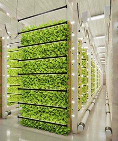 Indoor Farming, Hydroponic Farming, Hydroponics System, Urban Agriculture, Urban Farming, Indoor Garden, Indoor Outdoor, Vertical Farming, Grow Room