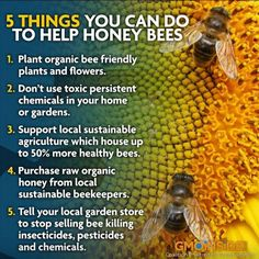 Bees are disappearing at a rapid rate - STOP killing bees. Description from pinterest.com. I searched for this on bing.com/images