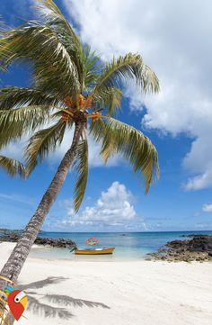 Traumurlaub zum Traumpreis #mauritius #travel #dreamholidays #holidays