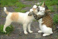 -amizade-de-gato-e-cachorro-