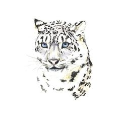 Snow leopard, 5x7 PRINT from original painting, big cats, art... ($12) ❤ liked on Polyvore featuring home, home decor, wall art, paper wall art, water color painting, watercolour painting, watercolor painting and watercolor wall art