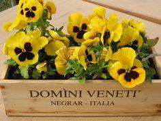fioriere alternative cassette del vino gardening recycling