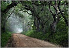 the road leading to Edisto Beach, South Carolina. I miss it like whoa.