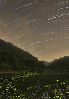 Another sure sign of summer in rural Japan is fireflies… kawaiistudyjapan.com