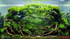 Aquarium Garden, Aquarium Landscape, Nano Aquarium, Aquarium Design, Planted Aquarium, Aquatic Plants, Aquascaping, Aquaponics, Water Garden